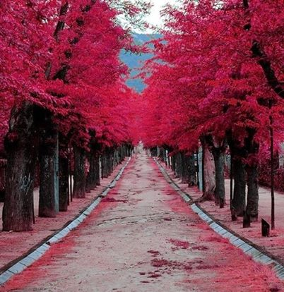 pinktrees