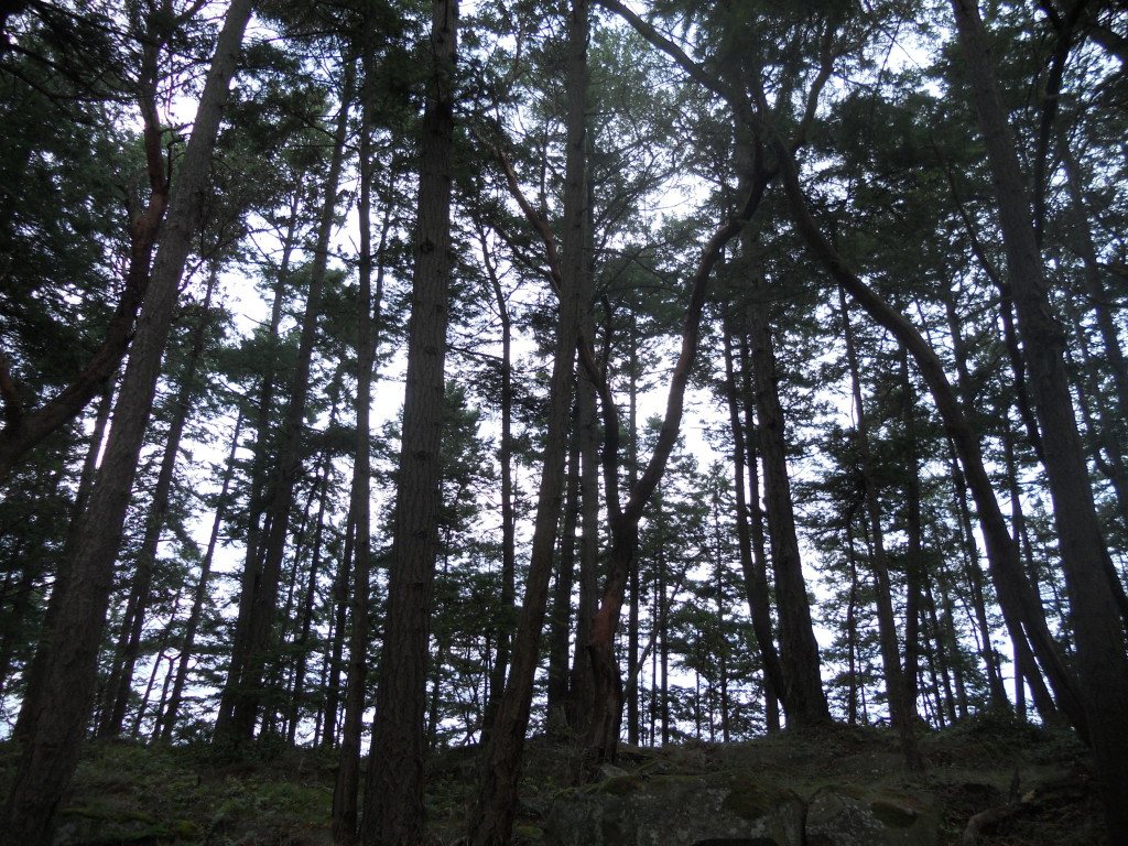 mayneforest